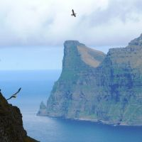 Sea birds and cliffs (Michelle Harvie)